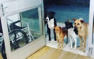H συγκινητική ιστορία τεσσάρων σκύλων που περίμεναν στην είσοδο νοσοκομείου
