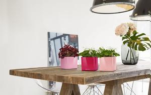 10 λουλούδια για εσωτερικούς χώρους