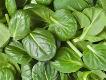 Αυτές είναι οι τροφές «δηλητήριο» για τα νεφρά 2b18d8fedc2