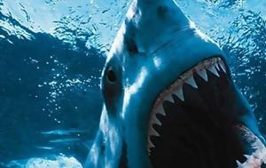 Το μεροκάματο του τρόμου  Κολυμπώντας ανάμεσα σε καρχαρίες στο ενυδρείο  Κρήτης e287d483449