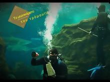 Το μεροκάματο του τρόμου  Κολυμπώντας ανάμεσα σε καρχαρίες στο ενυδρείο  Κρήτης - ΒΙΝΤΕΟ 63bf9f04e42
