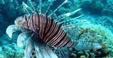 Τα ξενικά είδη κύρια αιτία της πρόσφατης εξαφάνισης πολλών ζώων και φυτών,