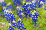Απρίλιος-Καλό Μήνα, Ευχές, 1 Απριλίου-Πρωταπριλιά,aprilios-kalo mina, efches, 1 apriliou-protaprilia