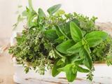 6 βότανα για άμεση απώλεια βάρους και καύση λίπους,