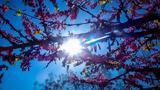 Καιρός Πάσχα, Καλοκαιρία, Μεγάλη Εβδομάδα – Πότε,kairos pascha, kalokairia, megali evdomada – pote