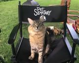 Pet Sematary, Μέιν Κουν,Pet Sematary, mein koun