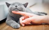 Γιατί πρέπει να κρατάμε τις γάτες μας στο σπίτι,
