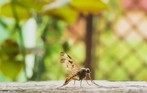 Κουνούπια, Αυτά, kounoupia, afta