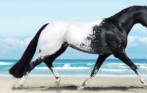 10 σπάνια και όμορφα άλογα που δεν ξανά έχετε δει ποτέ