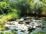 Ανοίγει, Βοτανικός Κήπος, ΕΚΠΑ,anoigei, votanikos kipos, ekpa