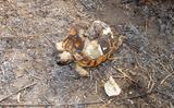 Φωτιά, Αλυκή Πιερίας, Μεγάλες,fotia, alyki pierias, megales