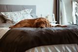 Τα βασικά πράγματα που δεν πρέπει να λείπουν από κανέναν σκυλογονιό!,