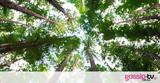 50 εκατομμύρια δέντρα φυτεύονται για να σώσουμε τον πλανήτη,
