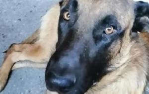 Νέα επίθεση σκύλου σε παιδιά - Στο νοσοκομείο ένα αγόρι και ένα κορίτσι