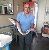 Ψάρι-φίδι, ΠΑΛΑΙΡΟ -[ΦΩΤΟ],psari-fidi, palairo -[foto]