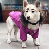 Σκυλί, Φαίνεται, Φρίντα Κάλο,skyli, fainetai, frinta kalo