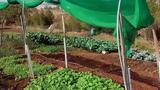 Ο λαχανόκηπος της «παρέας»,