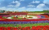 Miracle Garden, Ντουμπάι,Miracle Garden, ntoubai