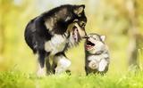 Η ορμόνη της αγάπης κάνει τους σκύλους ξεχωριστούς,