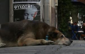 ΦΝΘ, Σκυλιά, [βίντεο], fnth, skylia, [vinteo]