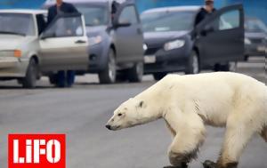 Οι πάγοι λιώνουν,  οι άνθρωποι εξαπλώνονται και οι πολικές αρκούδες ωθούνται στον κανιβαλισμό