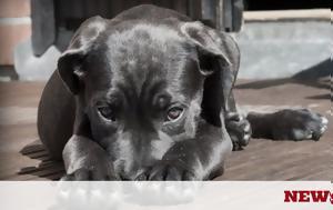 Συναγερμός, Σκύλος, synagermos, skylos