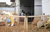 ΛΔ Κονγκό, Ανησυχία, Έμπολα,ld kongko, anisychia, ebola