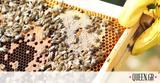 Ήξερες, Παγκόσμια Ημέρα, Μέλισσας,ixeres, pagkosmia imera, melissas