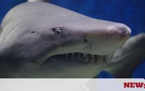 Τραγωδία, Καρχαρίας, 15χρονο, tragodia, karcharias, 15chrono