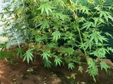 Ρόδος, Καλλιεργούσε,rodos, kalliergouse