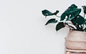 5 καλοκαιρινά φυτά εσωτερικού χώρου που θα κάνουν το σπίτι σου πιο μοντέρνο!