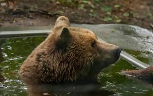 Σανγκάη, Αρκούδες, Video, sangkai, arkoudes, Video