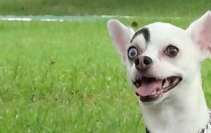Σατανικό, Σκύλος, - Βίντεο, sataniko, skylos, - vinteo