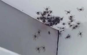 Αυστραλία, Εφιάλτης, afstralia, efialtis