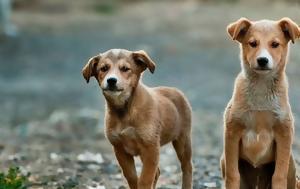 Τι αλλάζει με το νομοσχέδιο για ζώα συντροφιάς και αδέσποτα
