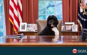Πέθανε, Μπο, Μπαράκ Ομπάμα, Λευκού Οίκου, pethane, bo, barak obama, lefkou oikou