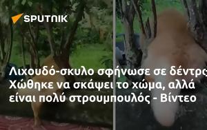 Λιχουδό-σκυλο, Χώθηκε, - Βίντεο, lichoudo-skylo, chothike, - vinteo