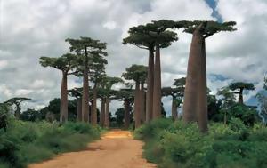 Μαδαγασκάρη, madagaskari