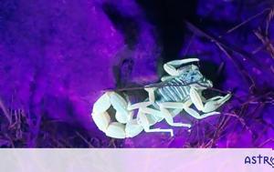 Σκορπιού, skorpiou
